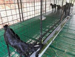 711286c5074 Plastic Slatted Flooring Used for Goat Farm