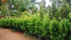 Tree Plantation Service
