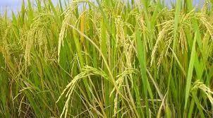 1 To 100 Acres Agri Land Sale Kovilpatti