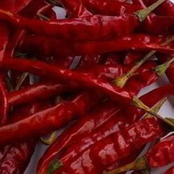 Hot Teja Chili Pepper From Guntur