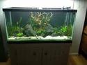 Black Aquarium Background