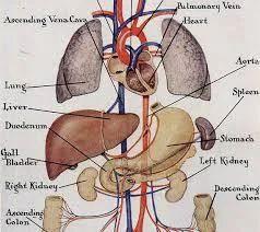 Human Anatomy Charts - Manufacturers, Suppliers & Wholesalers