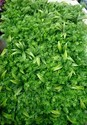 Hyperboles Artificial Vertical Green Wall Tile ( Uv Rays Protected)