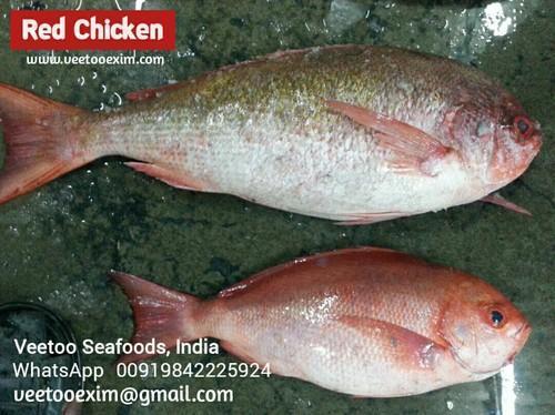 Sea Fish - Sankara Fish Exporter from Ramanathapuram