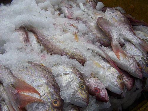 Frozen Fish Wholesale Supplier from Kanyakumari