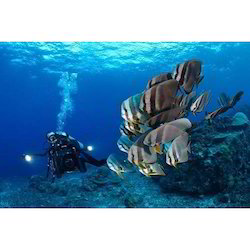 Underwater Photography And Filming Services