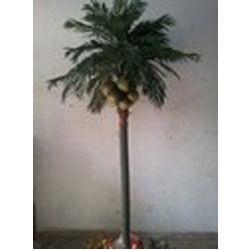 Coconut Tree 8 Feet