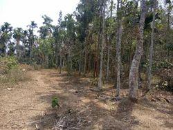Flat Land For Immediate Sale