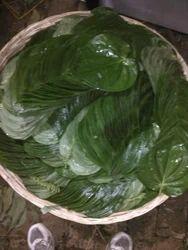 Fresh Bhavna Betel Leaf