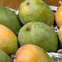 Malda, Langurs , Mumbai Mango