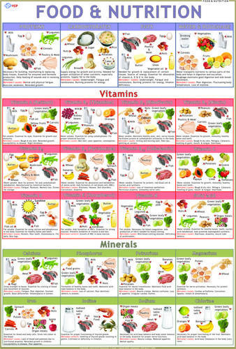 Food Amp Nutrition Charts Size 70 X 100 Cm Rs 120 Piece