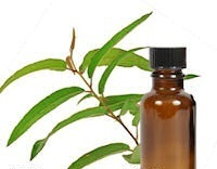 Essential Physical Pain Oils