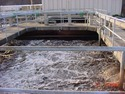 Bacterial Culture For Water Treatment