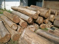 Teak Timber Log