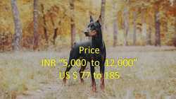 Manufacturer of Pet-Sale-In-India & Pet-Sale-In-punjab by Punjab