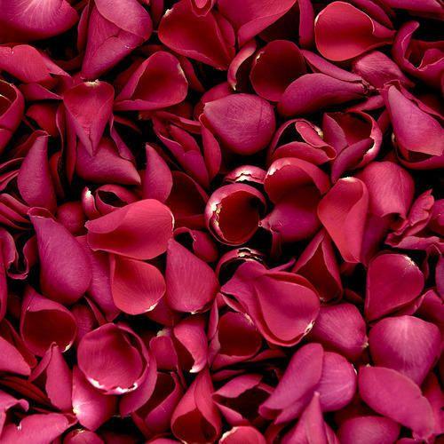 Rose Petals   U0917 U0941 U0932 U093e U092c  U0915 U0940  U092a U0901 U0916 U0941 U0921 U093c U093f U092f U093e U0901
