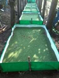 Polyethylene Azolla Bed