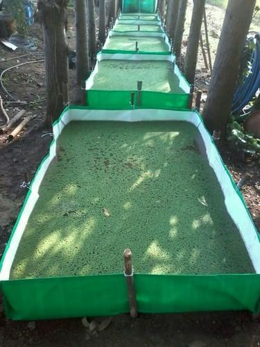 Azolla Bed At Rs 850 Piece Vermi Beds Id 15532177848