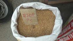 Sarwati Wheat