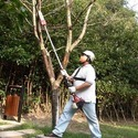 Tree Branch Cutter