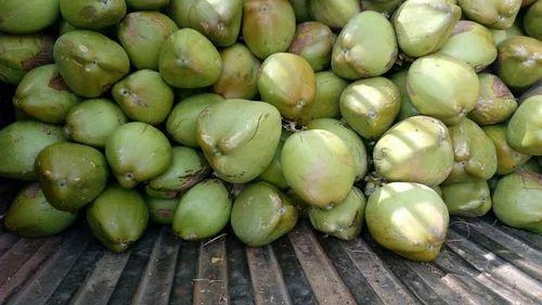 Fresh Coconut - Tender Coconut Manufacturer from Palladam