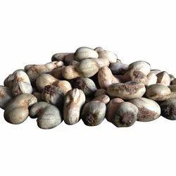 Fresh Raw Cashew Nut