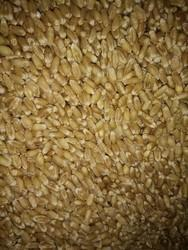 Indian Golden Wheats, Pack Type: Packets