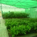 Hdpe Green House Nursery Net
