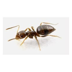 Rover Ants Control Services