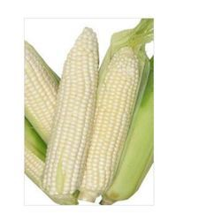 Sell White Corn