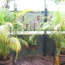 Garden Plant In Chennai Latest Price Amp Mandi Rates From