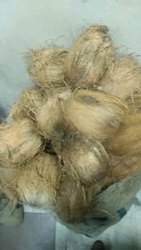 Small Size Coconut